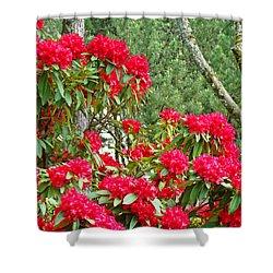 Red Rhododendron Garden Art Prints Rhodies Landscape Baslee Troutman Shower Curtain by Baslee Troutman