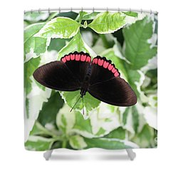 Red Rim Butterfly #2 Shower Curtain