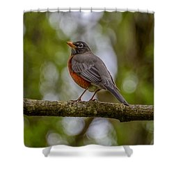 Shower Curtain featuring the photograph Red Robin by Jerry Cahill