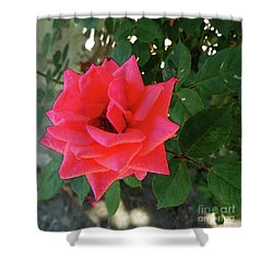 Pink Rose  Shower Curtain by Don Pedro De Gracia