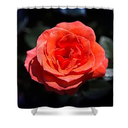 Red Rose Art Shower Curtain
