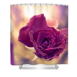 Red Rose Shower Curtain by Charuhas Images