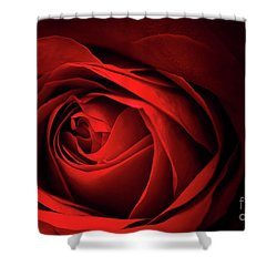 Red Rose Close Shower Curtain