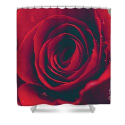 Shower Curtain featuring the photograph Red Rose Floral Bliss by Sharon Mau