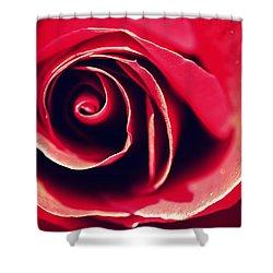 Red Rose Shower Curtain by Joseph Skompski