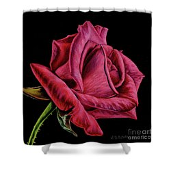 Red Rose On Black- Square Format Shower Curtain