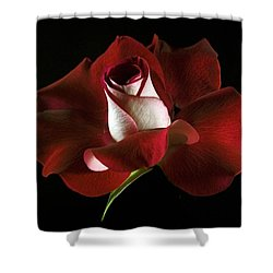 Shower Curtain featuring the photograph Red Rose Petals by Elsa Marie Santoro