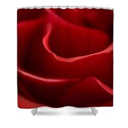 Red Roses V Shower Curtain