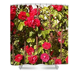 Red Roses In Summertime Shower Curtain by Arletta Cwalina