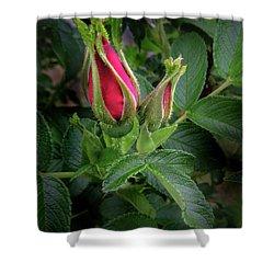 Red Rugosia Bud Shower Curtain