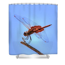 Red Saddlebag Dragonfly Shower Curtain