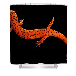 Red Salamander Shower Curtain