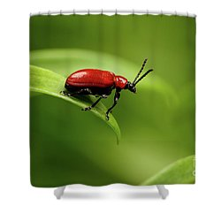 Red Scarlet Lily Beetle On Plant Shower Curtain