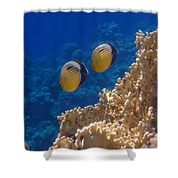 Red Sea Exquisite Butterflyfish  Shower Curtain
