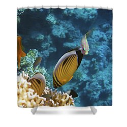 Red Sea Magical World Shower Curtain