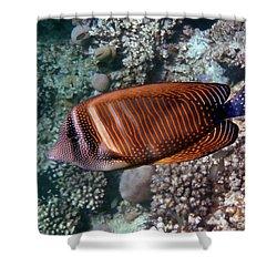 Red Sea Sailfin Tang 3 Shower Curtain