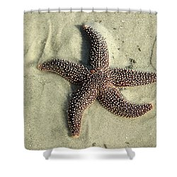 Red Sea Star Shower Curtain