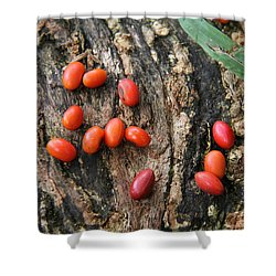 Red Seeds Shower Curtain