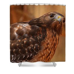 Red Shouldered Hawk 1  Shower Curtain by Chris Flees