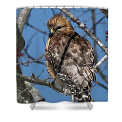 Shower Curtain featuring the photograph Red Shouldered Hawk 2017 by Bill Wakeley