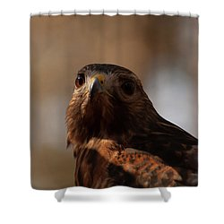 Red Shouldered Hawk Close Up Shower Curtain by Chris Flees