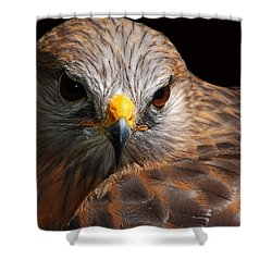 Shower Curtain featuring the photograph Red-shouldered Hawk by Lorenzo Cassina