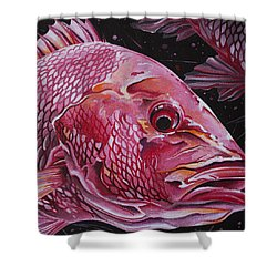 Red Snapper Shower Curtain by William Love