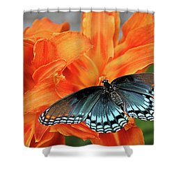 Shower Curtain featuring the photograph Red Spotted Fritillary by Kristin Elmquist