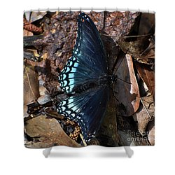 Shower Curtain featuring the photograph Red Spotted Purple Admiral by Skip Willits