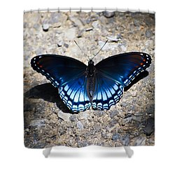 Red-spotted Purple Butterfly Shower Curtain