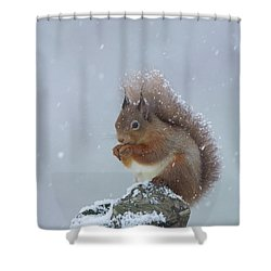 Red Squirrel In A Blizzard Shower Curtain