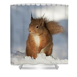 Red Squirrel In The Snow Shower Curtain