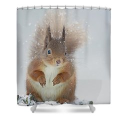 Red Squirrel In Winter Shower Curtain