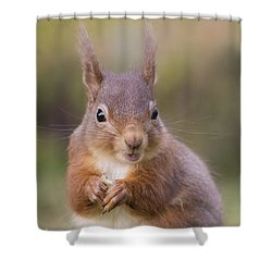 Red Squirrel - Scottish Highlands #18 Shower Curtain