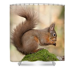 A Moment Of Meditation - Red Squirrel #27 Shower Curtain