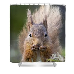 Red Squirrel - Scottish Highlands #28 Shower Curtain