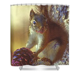 Red Squirrel With Pine Cone Shower Curtain