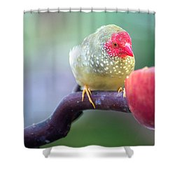 Red Star Finch Shower Curtain