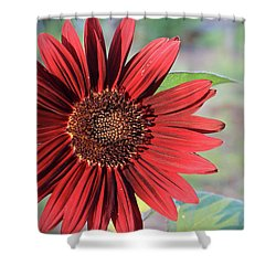 Red Sunflower Shower Curtain