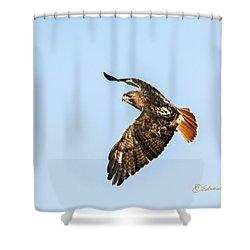 Red-tail Hawk In Flight Shower Curtain