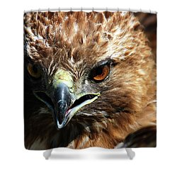 Shower Curtain featuring the photograph Red-tail Hawk Portrait by Anthony Jones
