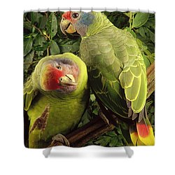 Red-tailed Amazon Amazona Brasiliensis Shower Curtain by Claus Meyer