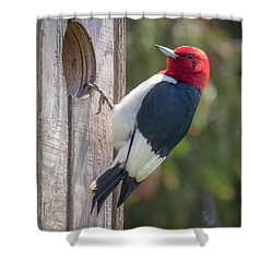 Shower Curtain featuring the photograph Red-headed Woodpecker 2018  by Ricky L Jones