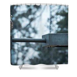 Shower Curtain featuring the photograph Red Tailed Hawk At Parkside by Ricky L Jones