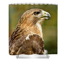 Shower Curtain featuring the photograph Red-tailed Hawk Close-up by Ann Bridges
