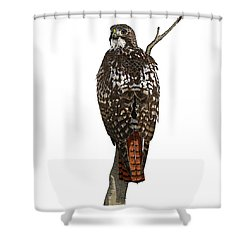 Red-tailed Hawk - Color Shower Curtain