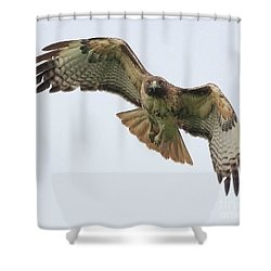 Red Tailed Hawk Finds Its Prey Shower Curtain