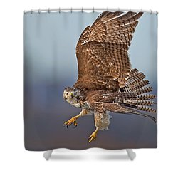 Red-tailed Hawk In Flight Shower Curtain