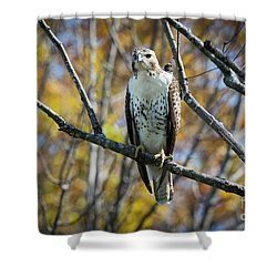 Shower Curtain featuring the photograph Red-tailed Hawk In The Fall by Ricky L Jones