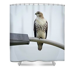 Shower Curtain featuring the photograph Red-tailed Hawk Looking At Me by Ricky L Jones